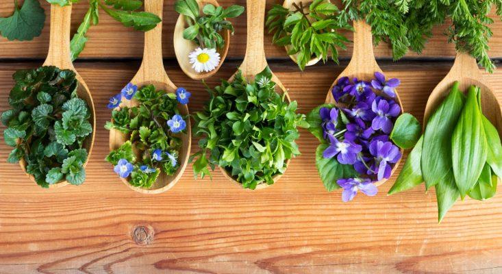 Des cuillères en bois remplies de plantes médicinales pour la santé en naturopathie