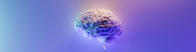 cerveau humain santé kinésiologie